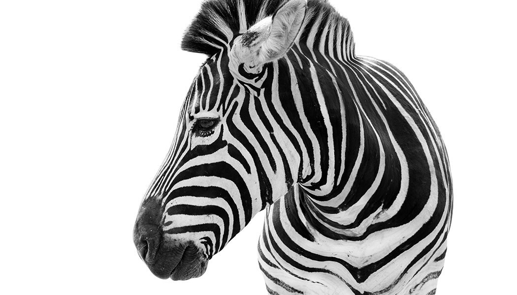 Whats-a-Zebra-got-to-do-with-ediscovery